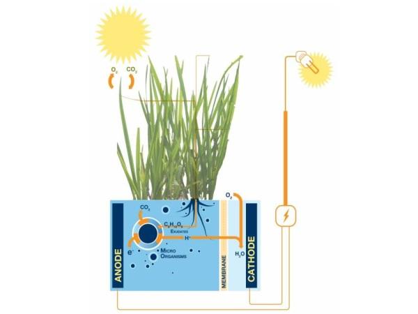 Plant-e3