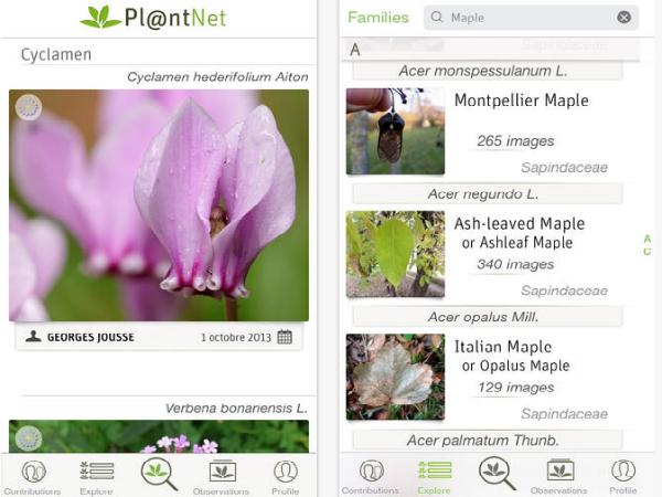 植物に特化した画像検索アプリ「PlantNet」