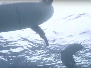 Sharkbanz2