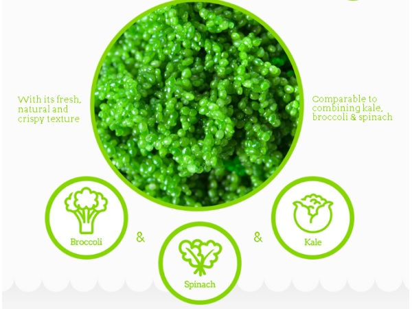 GreenOnyx2