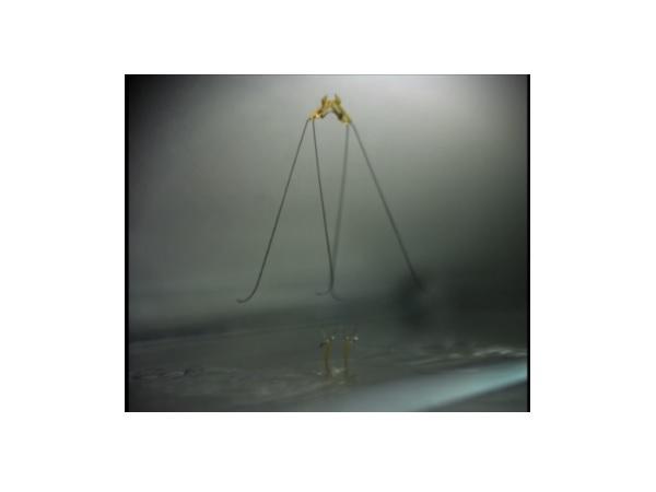 waterstriderrobot2