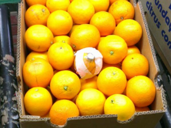 レモンの輸送にフルーツ型センサーを同梱する様子