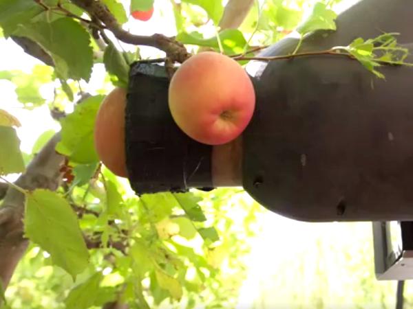 ロボットがリンゴを収穫する様子