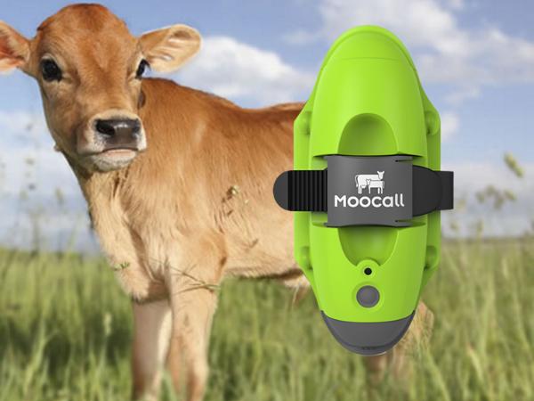 牛のためのウェアラブルデバイス「Moocall」