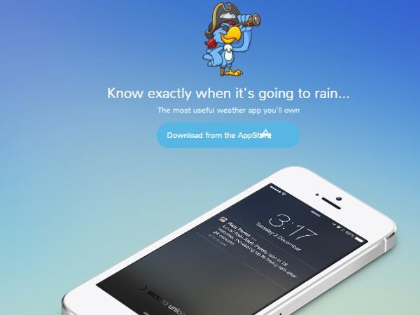 rainparrot_1