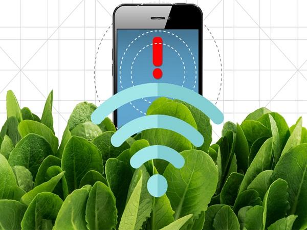 MIT spinach sensor 01