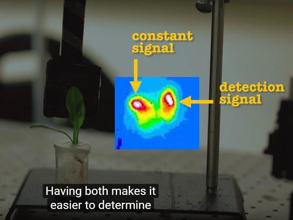 MIT spinach sensor 02