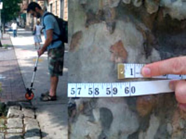 TreesCount!の街路樹調査