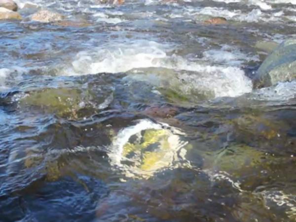 Waterlilyが川の中で水力発電する様子