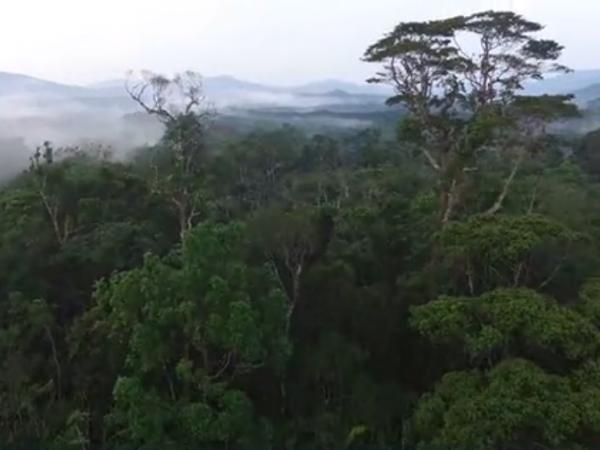 消失しつつあるアマゾン熱帯雨林